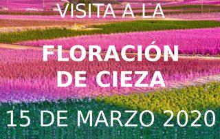 viaje a la floración de cieza